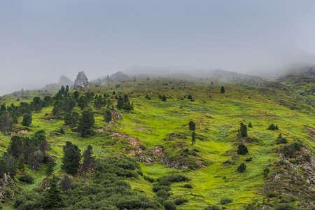 green mountains with trees shrubs and dense fog Zdjęcie Seryjne