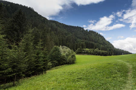 green meadow with pinetrees while hiking in the summer