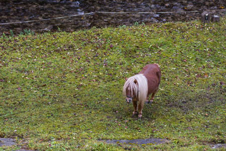 little singel horse on a pasture while hiking in the nature