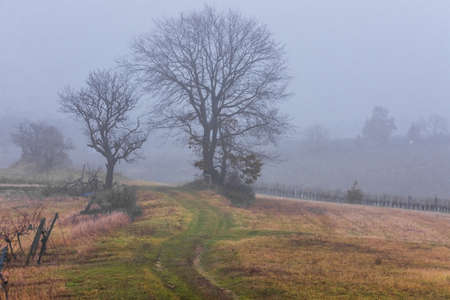 trees in a vine landscape with dense fog in winter