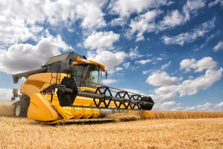 harvest field: close view of modern combine harvester in action. Stock Photo