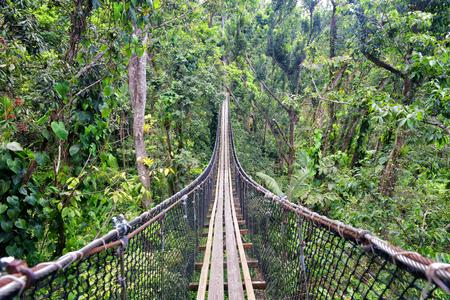 wooden footbridge path above green luxurious jungle
