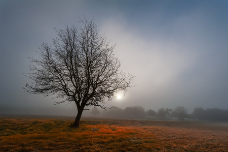 Close up of a lonely black tree  in the foreground of a autumn colored field with the faint light of the sun shining-through the misty morning fog in the background.