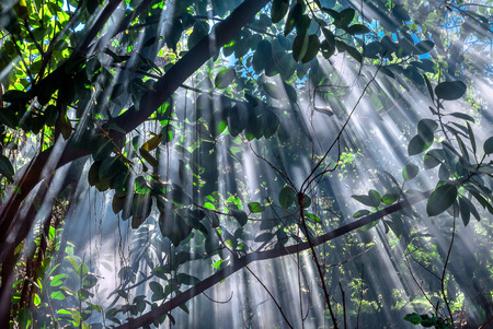 Magical moment of sunlight breaking through leaves and branches, Easter Island (Rapa Nui), Chile