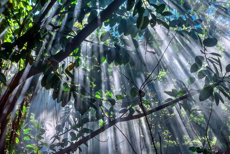 rapa nui: Momento mágico de la luz del sol de última hora a través de las hojas y ramas, la Isla de Pascua (Rapa Nui), Chile