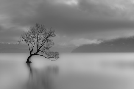 long lake: Lone Tree, Lake Wanaka, New Zealand black and white