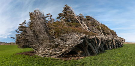 Windswept trees, The Catlins, New Zealand.