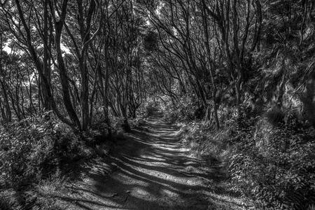Shadowland, Abel Tasman NP, New Zealand black and white