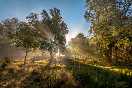amanecer: Explosión de la luz del sol que entra por las hojas y ramas de árbol a contraluz.