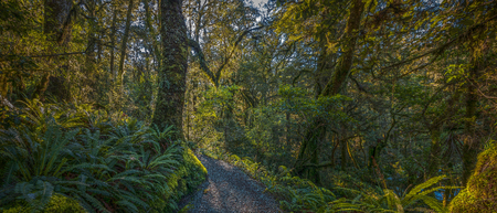 Panoramic view of twisting foot-path leading into a clearing of a dense tropical forest, New Zealand.