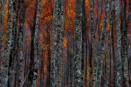 envoronment: Autumn trees