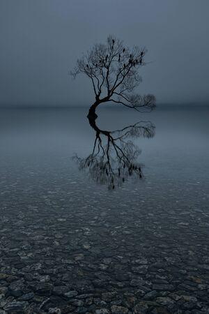 Lone tree with perched birds, Lake Wanaka, New Zealand Stok Fotoğraf