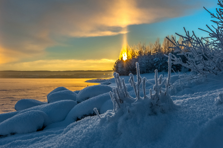 Sunrise through treetops at snowy lakeside with a frost covered bush in the foreground.