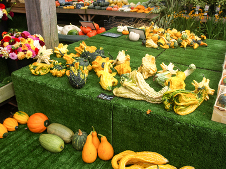 midlands: Various pumpkins on a market stand in the midlands , UK