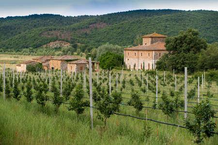 farmhouse: Orchard with a typical tuscan farmhouse.