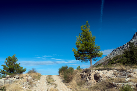 Pine tree with road and a blue sky in the Biokovo mountain range near the dalmatian town Omis in Croatia.