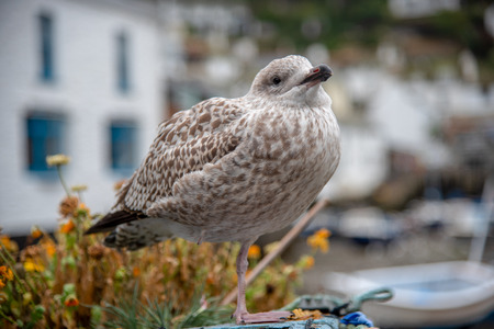 Brown speckled stands on a fence in the picturesque village Polperro in Cornwall, UK Banco de Imagens