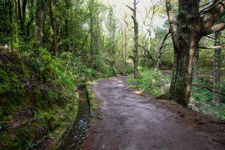 Hiking path on the Levada do Caldeirao Verde near Santana on the island of Madeira in Portugal.
