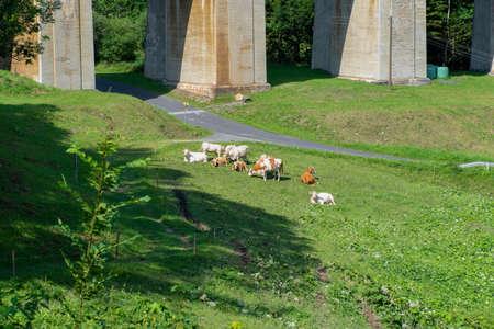 Cattel grazing near the viaduct over the Adlitzgraben on the Semmering Railway. 版權商用圖片