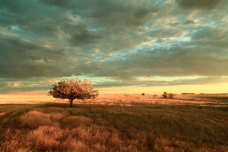 A solitary tree on field under a vivid, cloudy sky  photo