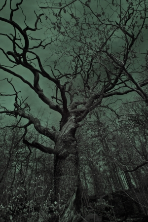 A big, old, eerie tree in a dark spooky and setting  photo
