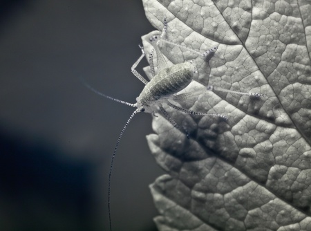 An aphid on a leaf in a closeup shot, represented in black and white  Фото со стока