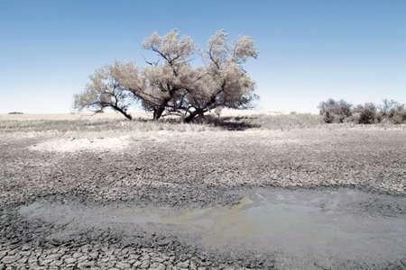 comprised: Un paesaggio tiro composto da un ambiente all'aperto asciutto, contenente qualche vegetazione secca, terra secca e una piccola pozza