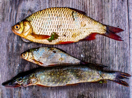 A set of three fish lying on a grey wooden table  Stock Photo - 21403406