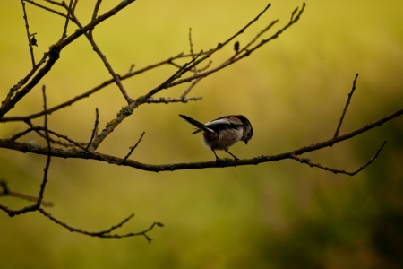 footing: A solitary house sparrow standing on a tree branch looking down on its footing