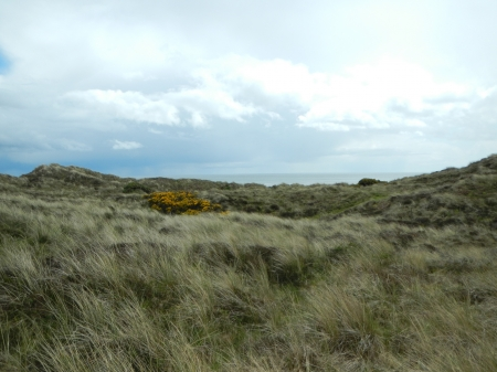 An image of a Northern Ireland highland meadow overlooking the sea below a cloudy sky