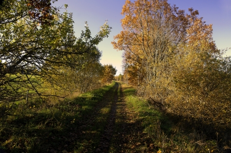 road autumnal: A picture of a shaded track road in a brightly lit autumnal landscape