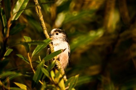 A closeup picture of a house sparrow holding on to a branch in some green foliage