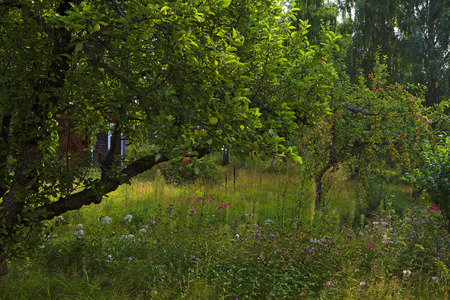 A picture of a vibrantly lush, overgrown garden in the summer