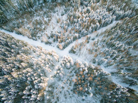 cross roads: Cross roads in the woods from above Stock Photo