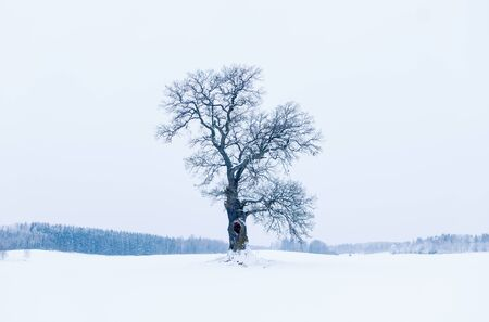 tree of life silhouette: Beautiful and serene an oak tree in winter