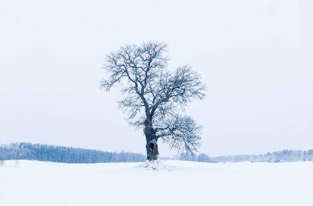 feuille arbre: Belle et sereine d'un ch�ne en hiver