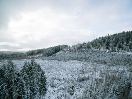 forested: Evergreen forested hill in late winter