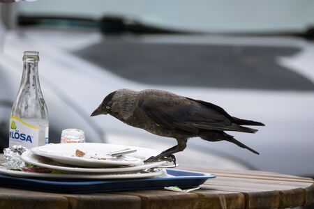 unsolicited: Unsolicited guest at the table
