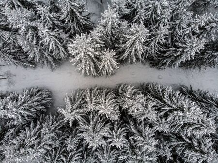 Birds eye view of a forest in winter 스톡 콘텐츠