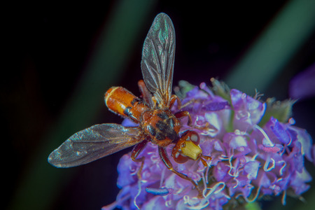 Red brown fly on a flower 스톡 콘텐츠