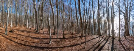 Beech Forest in early spring by Omberg natural reserv