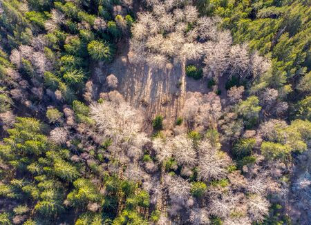 birds eye view of a  woodland