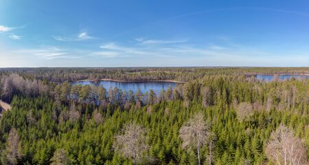Wooded  ostergotland panoramo of  a evergreen landscpe in  Sweden