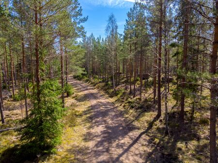 Dirt road in the Evergreen ostergotlandic forest in  Sweden