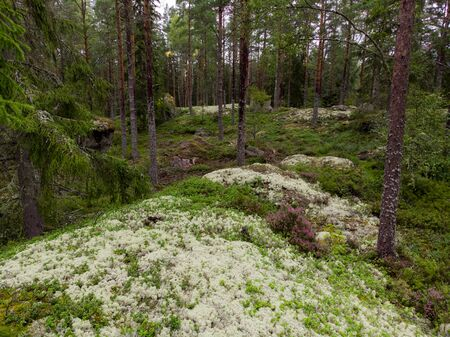 Forest view with moss, heather and trees