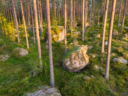 Evergreen forest with some large rocks 写真素材 - 132135778