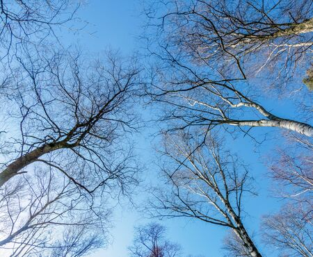 Looking up in the woods tree branches and sky in early spring