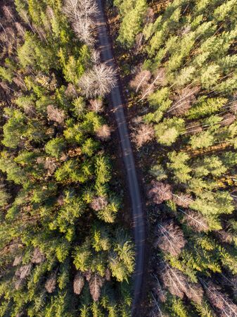 Dirt road cuts through the Evergreen forest