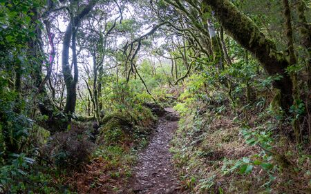 Walking trails of La Gomera island 写真素材
