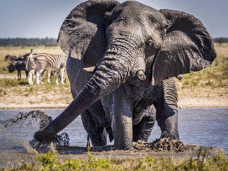 Portrait of a male elephant splashing around in a waterhole in Etosha National Park, Namibia 免版税图像